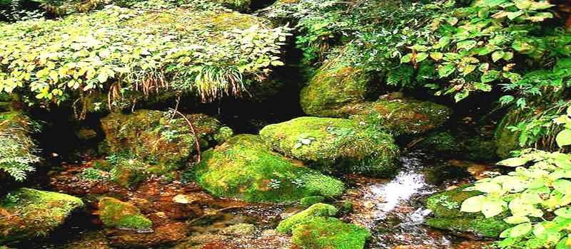 水の通販 ミネラルウォーター【郡上八幡の湧水】